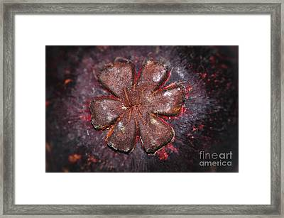 Tropical Mangosteen - Flower On Rind Framed Print by Kaye Menner