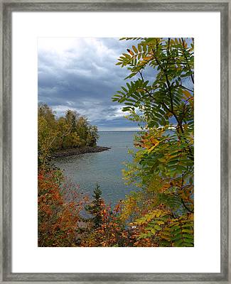 Tropical Mountain Ash Framed Print by James Peterson