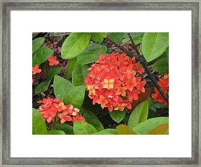 Framed Print featuring the photograph Tropical Orange Flower by Judy Palkimas