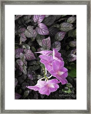 Tropical Orchids Framed Print