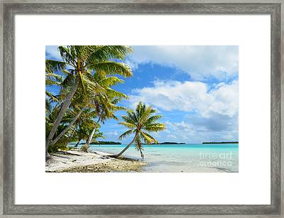 Tropical Beach With Hanging Palm Trees In The Pacific Framed Print