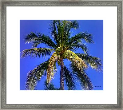 Tropical Palm Trees 8 Framed Print by Duane McCullough