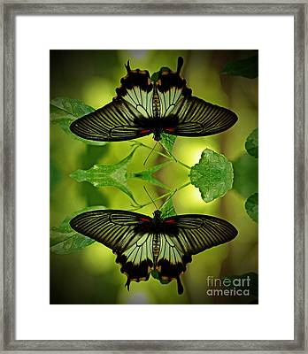 Tropical Paradise Framed Print by Inspired Nature Photography Fine Art Photography