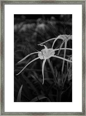 Framed Print featuring the photograph Tropical Paradise by Miguel Winterpacht