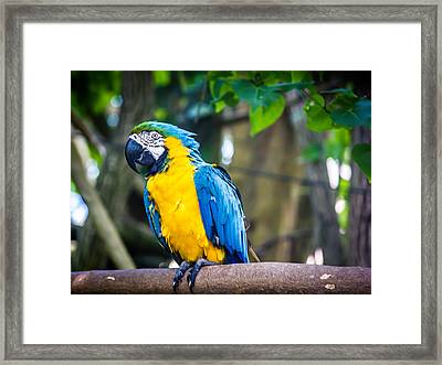 Tropical Parrot Framed Print