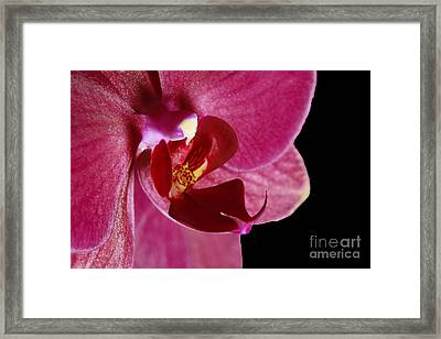 Tropical Passion Exotic Orchid Framed Print by Inspired Nature Photography Fine Art Photography