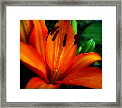 Tropical Passion Framed Print by Karen Wiles