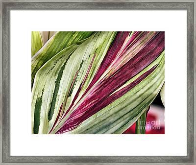 Tropical Plant Leaves Framed Print