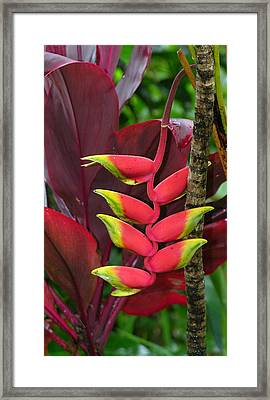 Tropical Plant Framed Print by Robert Lozen