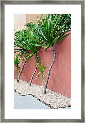 Tropical Plants Framed Print by Tom Gowanlock