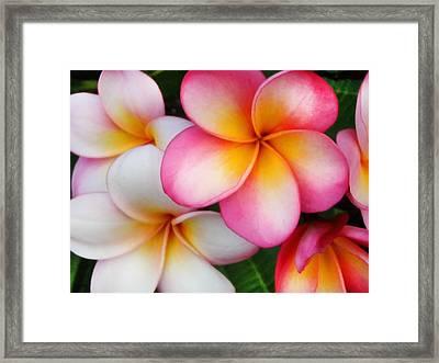 Tropical Plumeria Framed Print