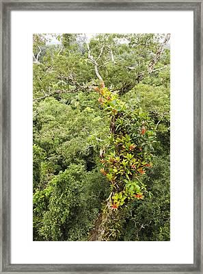 Tropical Rainforest Epiphytes Framed Print