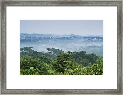 Tropical Rainforest Kibale Np Western Framed Print by Sebastian Kennerknecht