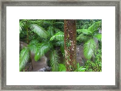 Tropical Rainforest, Mossman River Framed Print by Peter Adams
