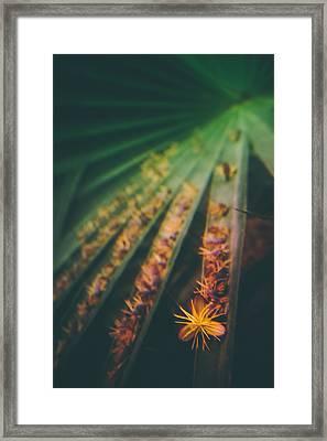 Tropical Ray  Framed Print