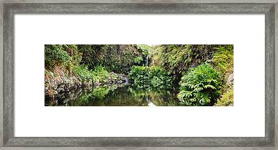 Tropical Reflections Framed Print
