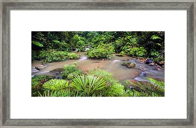 Tropical River Bank Framed Print by Alex Hyde