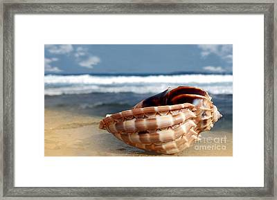 Tropical Shell Framed Print by Kaye Menner