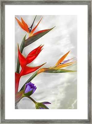 Tropical Splash Framed Print