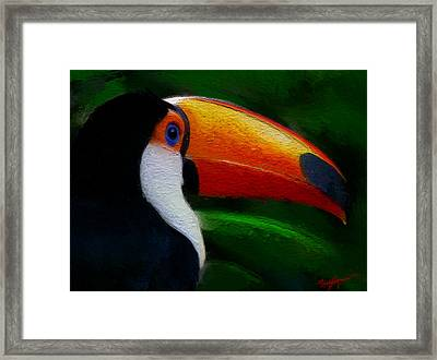Tropical Toucan  Framed Print by Anthony Fishburne