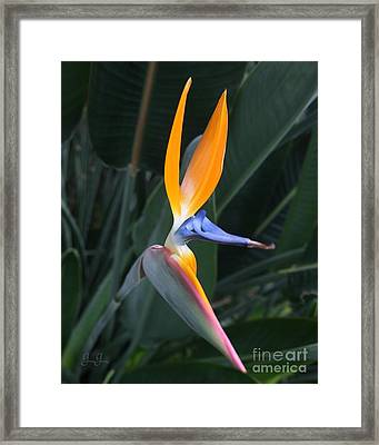 Tropical Touch Framed Print by Geri Glavis