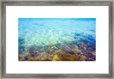 Tropical Treasures Framed Print