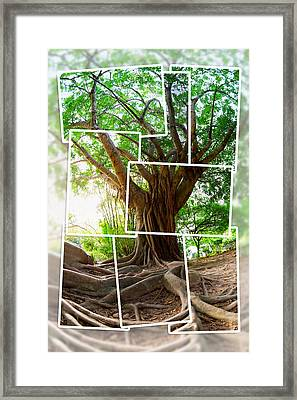 Tropical Tree Framed Print by Alexey Stiop