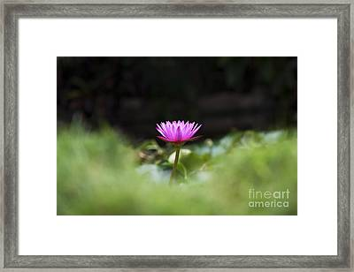 Tropical Water Lily Framed Print by Tim Gainey