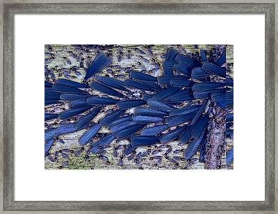 Tropical Winged Termites Framed Print by Science Photo Library