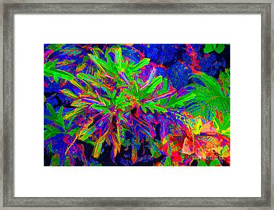 Framed Print featuring the photograph Tropicals Gone Wild by David Lawson