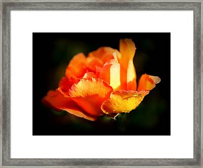 Tropicana Framed Print by Karen Wiles