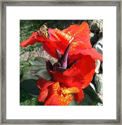 Tropicanna With Butterfly Framed Print by Jennifer Phares