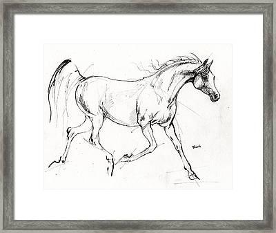 Trotting Arabian Horse Quick  Sketch Framed Print by Angel  Tarantella