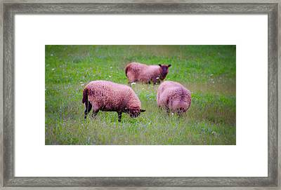 Trouble Comes In Three's Framed Print by Bill Cannon