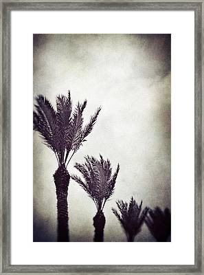 Trouble In Paradise Framed Print by Trish Mistric