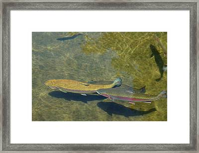 Trout Art Prints Wild Game Sports Fishing Framed Print