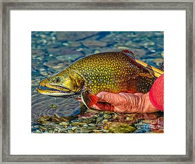 Trout Framed Print by Edward Fielding