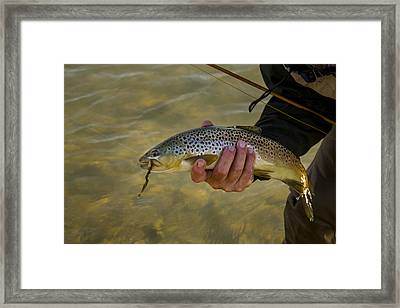 Trout Framed Print by Jean Noren