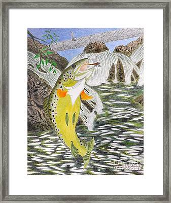 Trout Stream In May Framed Print