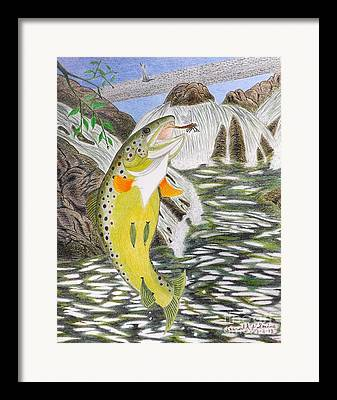 Leaping Trout Framed Prints