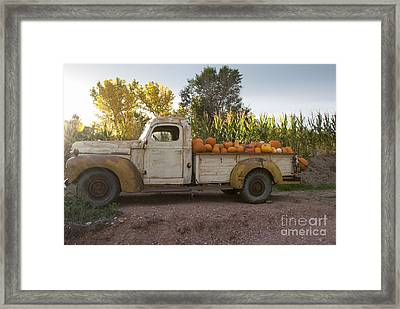 Pumpkin Time Framed Print by Juli Scalzi
