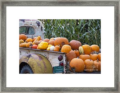 Truckful Of Pumpkins Framed Print by Juli Scalzi