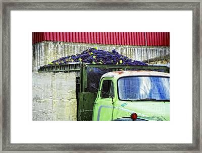 Truckload Of Grapes Framed Print