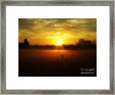 true Beauty in Light II Framed Print