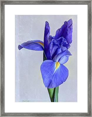 True Blue Framed Print by Heidi Smith