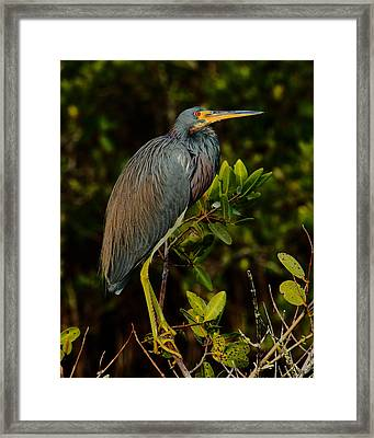 True Colors Framed Print