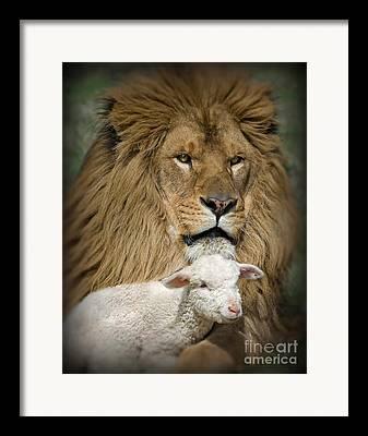 Jesus The Lion Of Judah Framed Prints