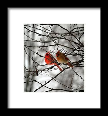 Northern Cardinal Framed Prints