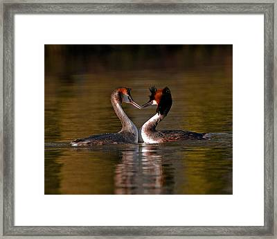 True Love Framed Print by Paul Scoullar