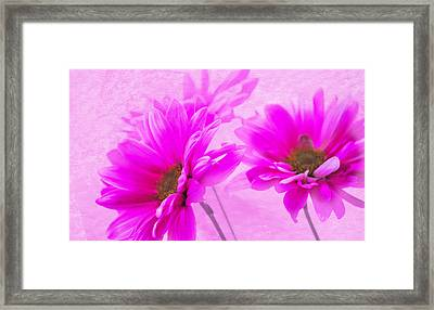 True Pink Framed Print